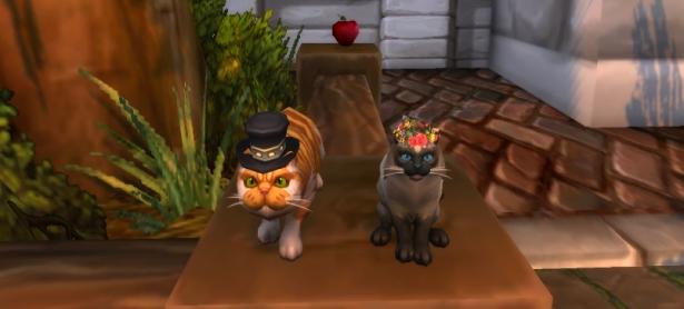 Папа кот и мама кошка: кото-пара мистер и миссис Взъерошка